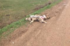 В Башкирии обнаружили несколько мешков с мертвыми собаками