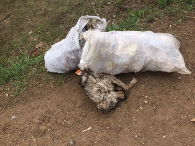 Photo of В Башкирии обнаружили несколько мешков с мертвыми собаками