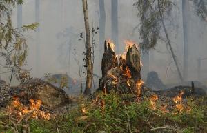 В Ишимбайском районе ликвидировали возгорания в лесном фонде - новости Ишимбая