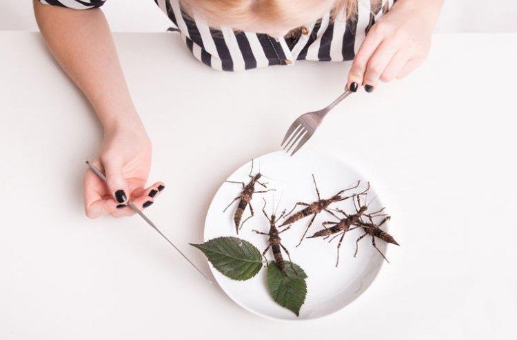 Photo of Ученые призвали есть насекомых вместо мяса для спасения планеты