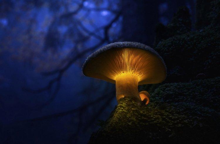 Российские биологи заставили грибы сиять всеми цветами радуги