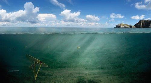 Photo of Бабочка будет порхать в морских глубинах