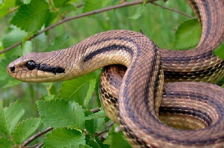 Photo of Мама позволила змее укусить годовалую дочку, чтобы «преподать ей урок»