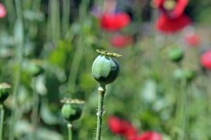 Photo of Житель Салавата выращивал в Ишимбайском районе мак — новости Ишимбая
