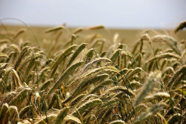 Photo of В Башкирии природоохранный прокурор потребовал от чиновников усилить контроль за состоянием сельхозземель