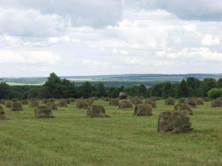 Photo of В Башкирии заготовлено 504 тыс тонн сена и 1 млн 540 тыс тонн сенажа