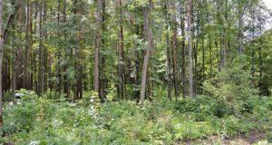 Пропавшая в Башкирии 3 летняя девочка ночь провела в лесу