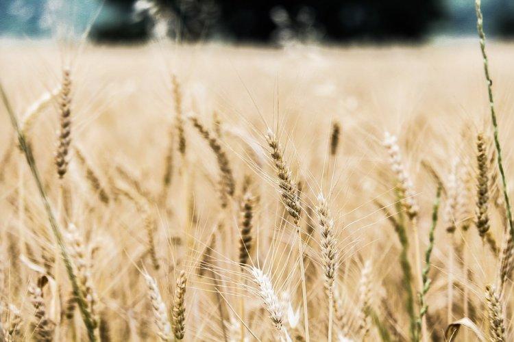Photo of В Стерлитамакском районе стартовал конкурс  «Урожай – 2017»