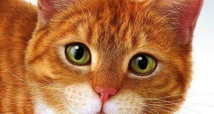 Башкирия в федеральных СМИ: башкирским гранитом Москва красна, республики сблизили раки, кот из Уфы   герой реалити шоу