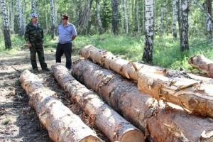 Photo of В Башкирии с начала года выявлен 291 факт незаконной рубки лесов