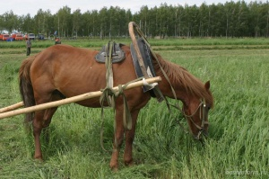 Photo of В Башкирии преступники убили пастуха и похитили его лошадь