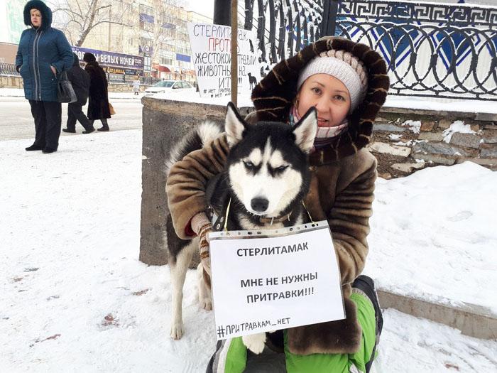 Photo of В Стерлитамаке прошел одиночный пикет в защиту животных