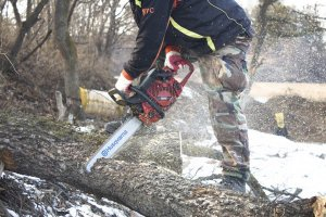 Photo of В Ишимбайском районе незаконно срубили деревья — новости Ишимбая