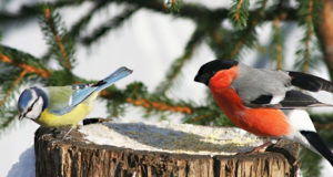 Уфимские любители природы рассказывают, чем можно подкармливать городских птиц