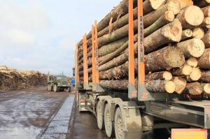 Photo of В 2017 году в Башкирии улучшилась ситуация с лесовосстановлением и незаконными рубками