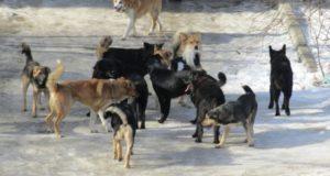 В Нефтекамске бродячие собаки напали на женщин
