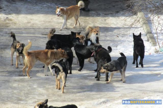 Photo of В Нефтекамске бродячие собаки напали на женщин