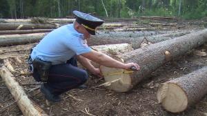 Photo of Житель Башкирии получил реальный срок за браконьерскую вырубку леса