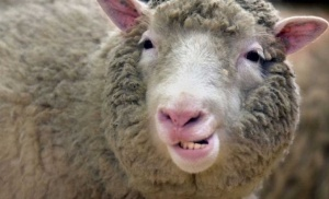 Photo of В Башкирии пьяные братья украли у соседа овцу и сварили из нее суп