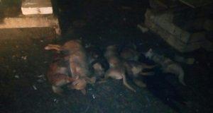 Более 50 щенков погибли в страшном пожаре в приюте под Воронежем