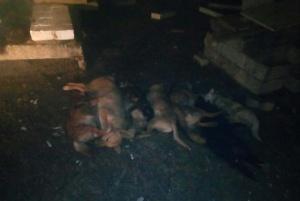 Photo of Более 50 щенков погибли в страшном пожаре в приюте под Воронежем