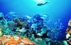 Из мирового океана резвыми темпами теряется кислород