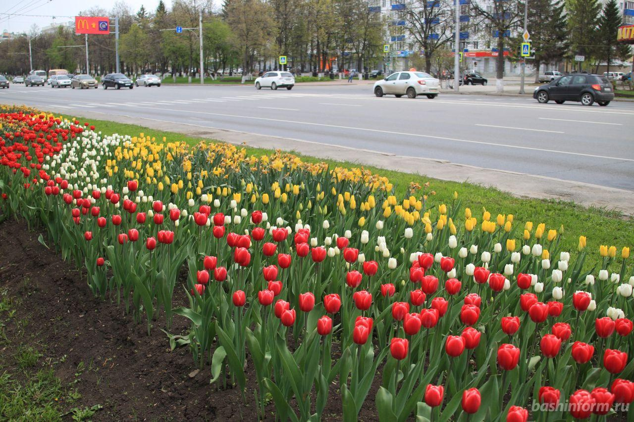 Photo of Летом столицу РБ украсят более 260 тыс цветов
