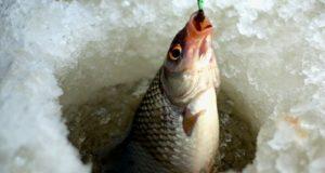 Рыбаки из Стерлитамака стали наилучшими в Башкирии