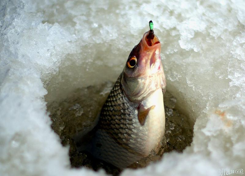 Рыбаки из Стерлитамака стали лучшими в Башкирии