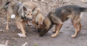 Уфимка с ребенком чуть не пострадала от нападения бездомных собак