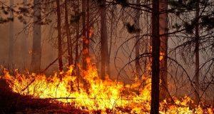 На Южном Урале обострилась ситуация с лесными пожарами – введен режим ЧС