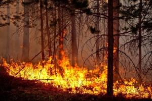 Photo of На Южном Урале обострилась ситуация с лесными пожарами – введен режим ЧС