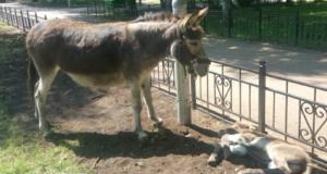 В туймазинском парке появился новый питомец по кличке Тимоша