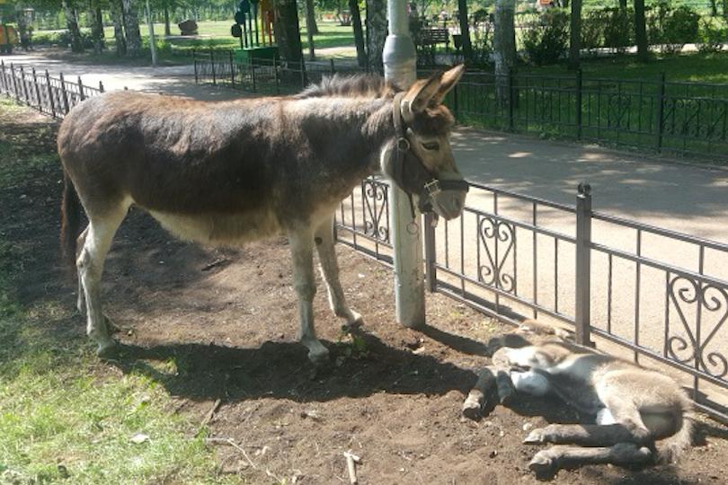 Photo of В туймазинском парке появился новый питомец по кличке Тимоша