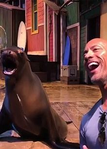 Photo of Дуэйн Джонсон убедил тюленя признать его самым сексуальным