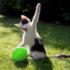 Коты и воздушные шары