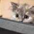 Кот испугался мира