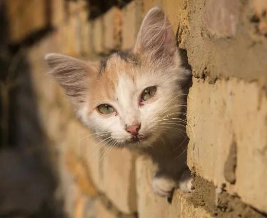 Котенок выглядывает из кирпичей