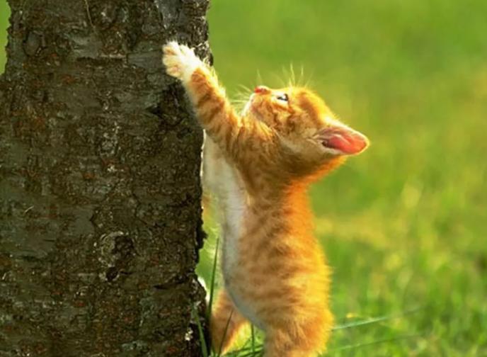 Котенок и дерево