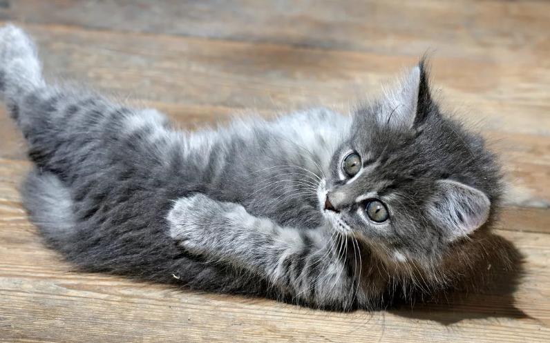 Photo of Коты с приколами в голове
