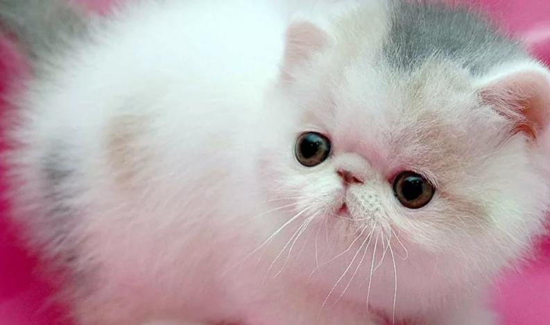 Котенок на розовом фоне