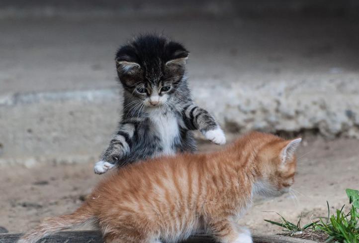Котята двое