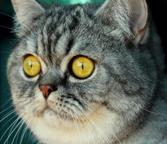 Кот против