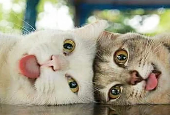 Кот с кошкой