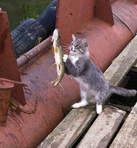 Кот с рыбой вместе