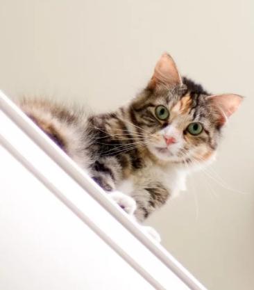 Кошка на шкафу