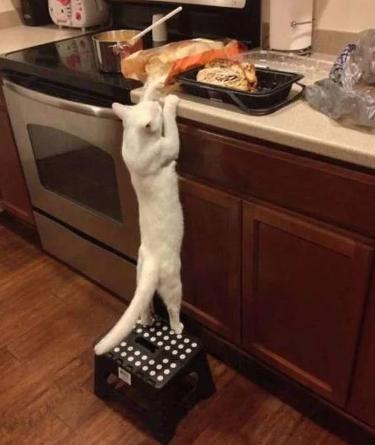 Кошка тянется к еде