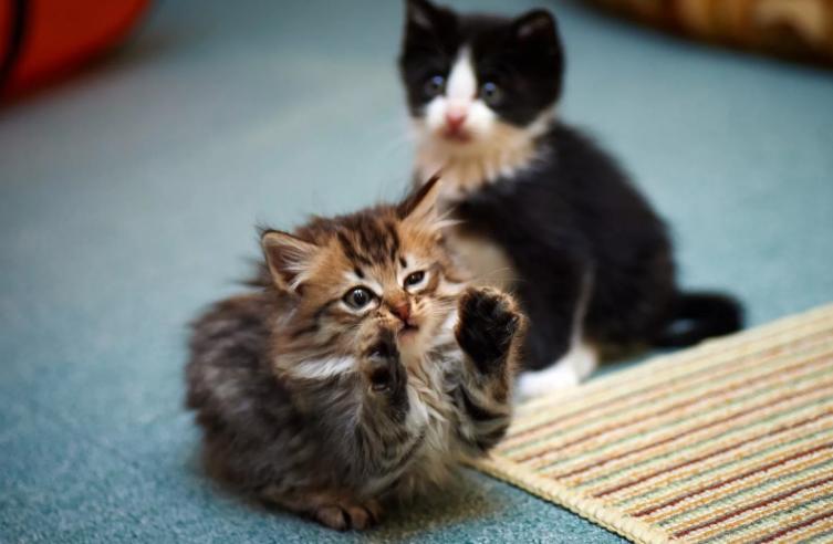котята вместе