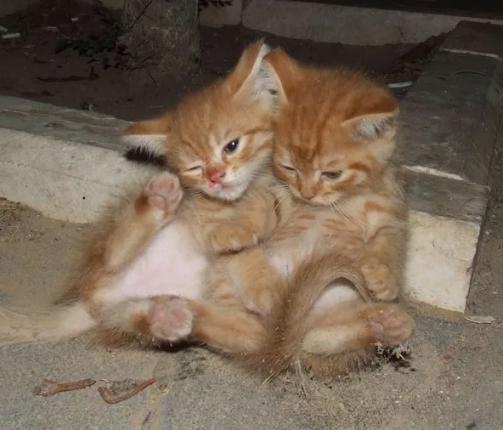 котята пьяные