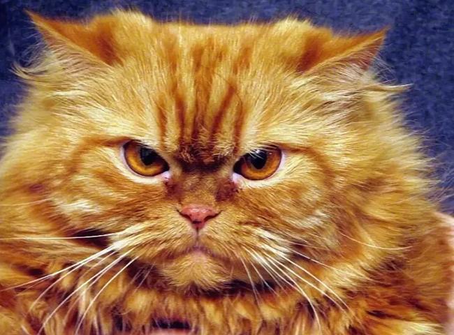 кот вредный